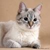 Товары, регулирующие кошачье поведение – антицарапки и успокоительные препараты