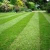 Преимущества и недостатки рулонного газона