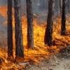 Как не стать жертвой лесных пожаров